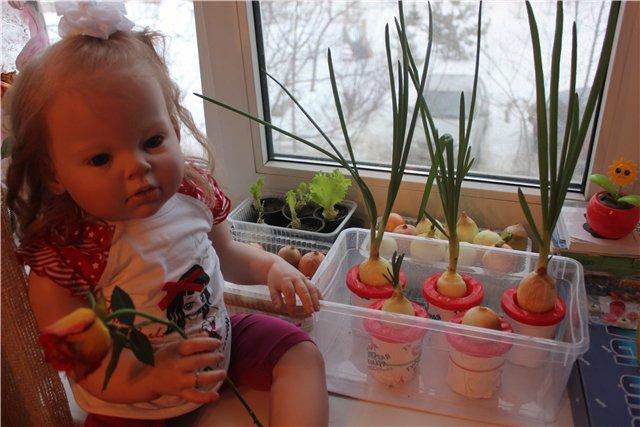 выращиваение зелени на подоконниках