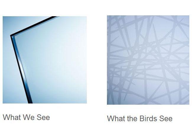 Остекление фасадов, столкновение птиц с остеклением высоток