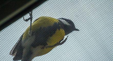 птица на москитной сетке